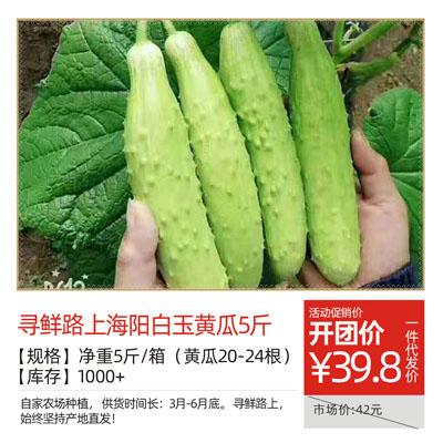 寻鲜路上海阳白玉黄瓜5斤